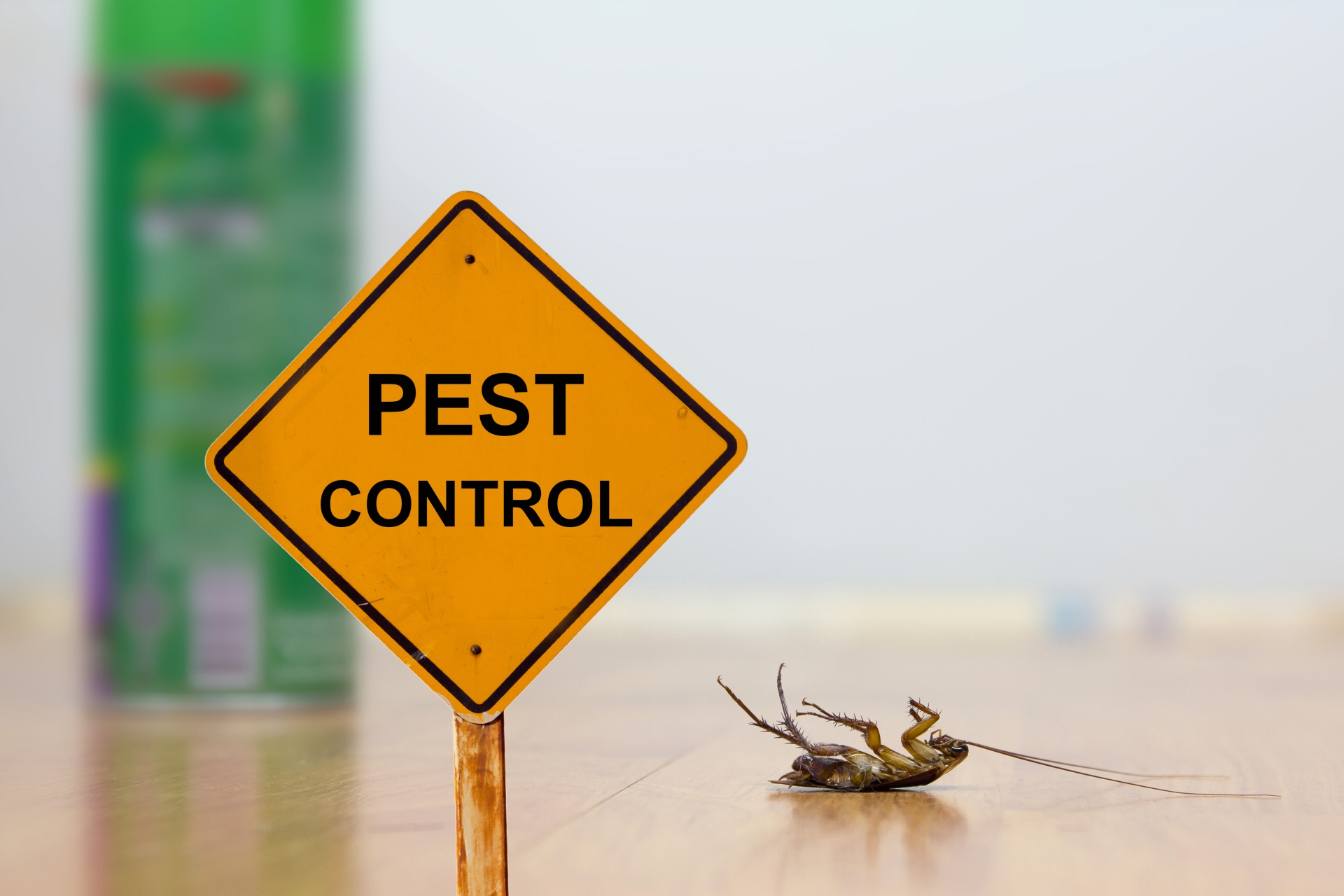 24 Hour Pest Control, Pest Control in Gordon Hill, EN2. Call Now 020 8166 9746